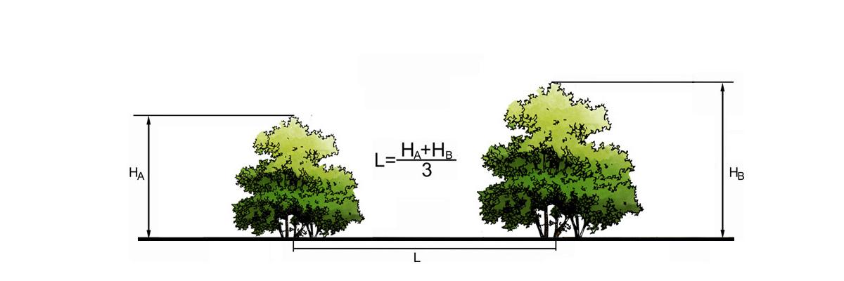 Расстояние между местами посадки кустарников