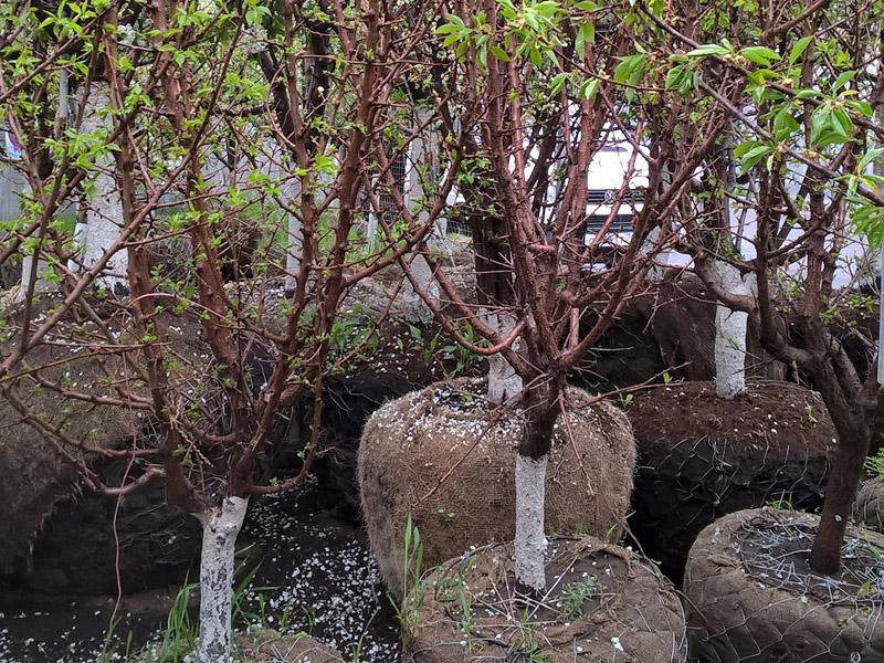 Растения с закрытым корнем