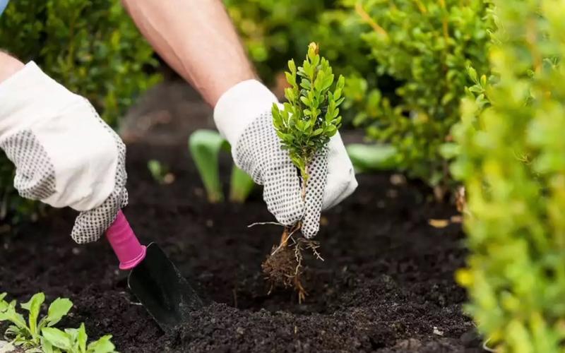 Посадка небольших декоративных растений