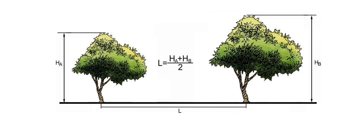 Расстояние между местами посадки деревьев