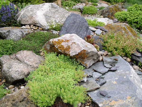 Устройство цветников и газонов при озеленении